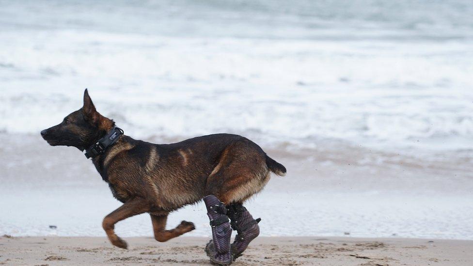 kuno dog runs