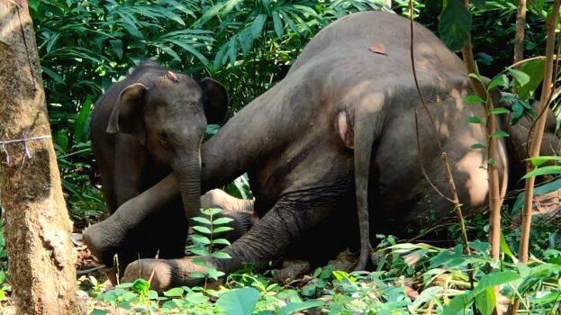 elephant baby13