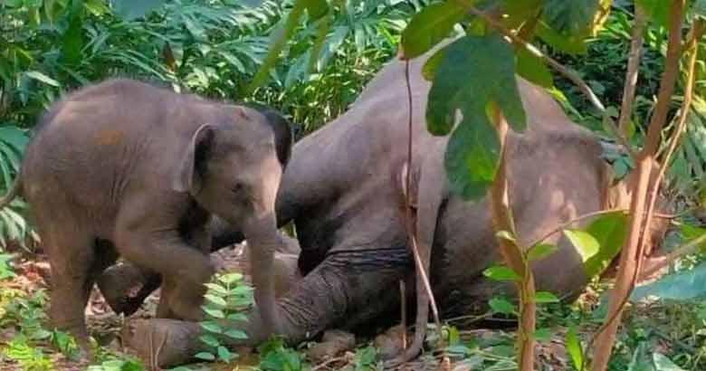 elephant baby12