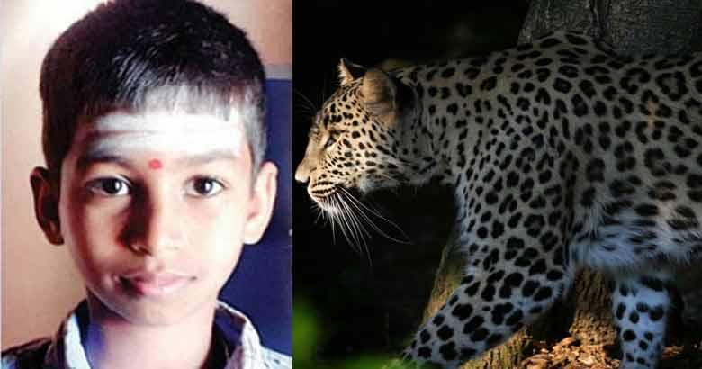 nandan and leopard_